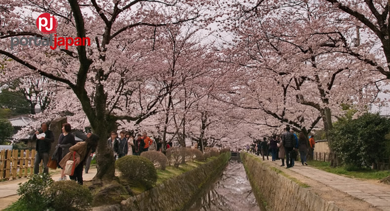 &nbspPhilosopher's Path: Isang sikat na cherry blossom viewing spot sa Kyoto