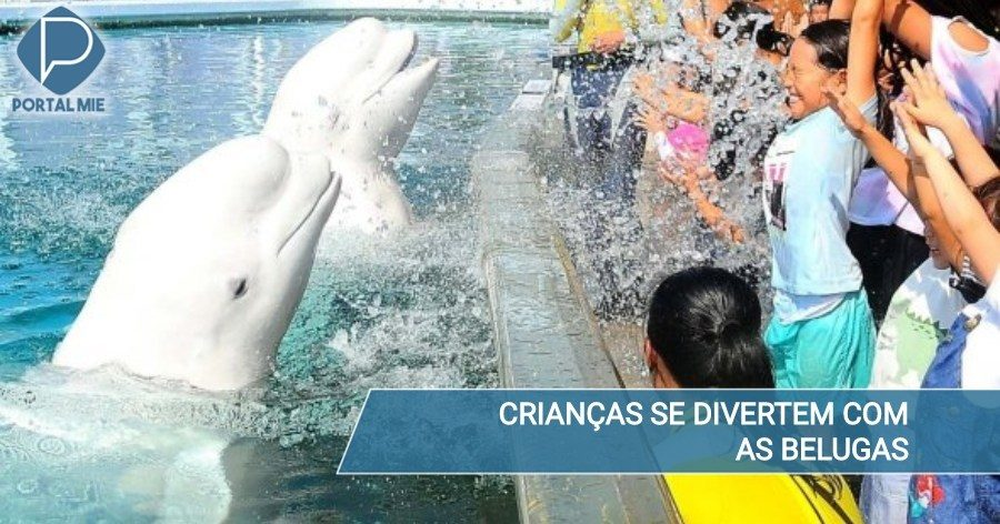 &nbspWhite dolphins a.k.a Belugas are popular with children at Yokohama Aquarium
