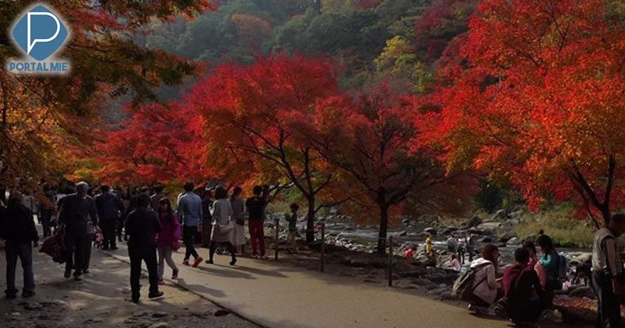 &nbspKorankei: An Amazing Place to Visit in Aichi during Autumn