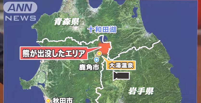 &nbspTwo men killed in apparent bear attacks in Akita