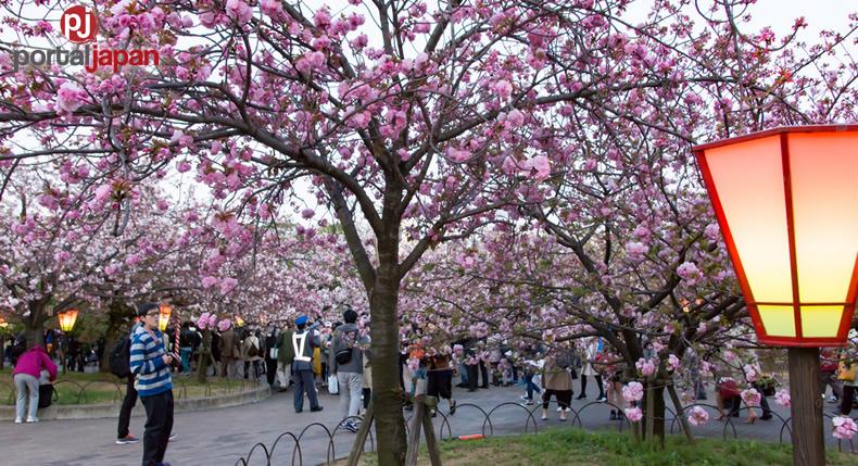 &nbspAng Japan mint sa Osaka ay nag-bukas ng gate sa kalye na puno ng Sakura