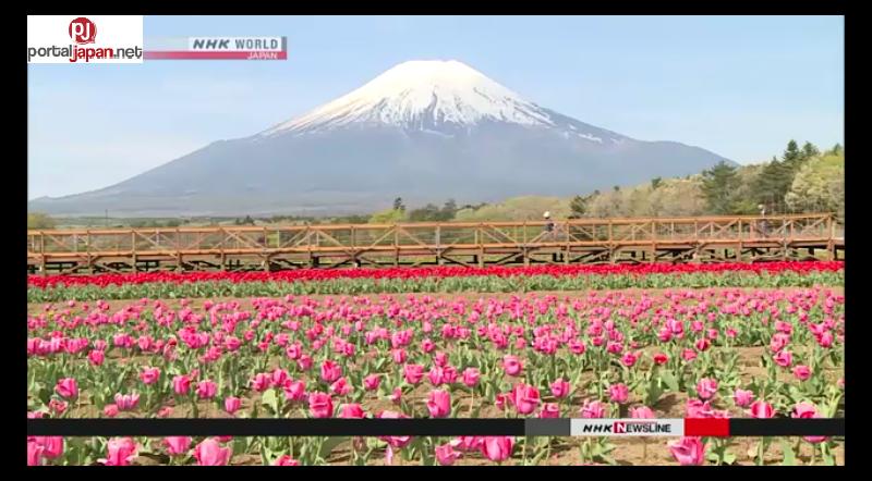 &nbspIba't-ibang kulay na Tulips, makikita sa paanan ng Mt. Fuji