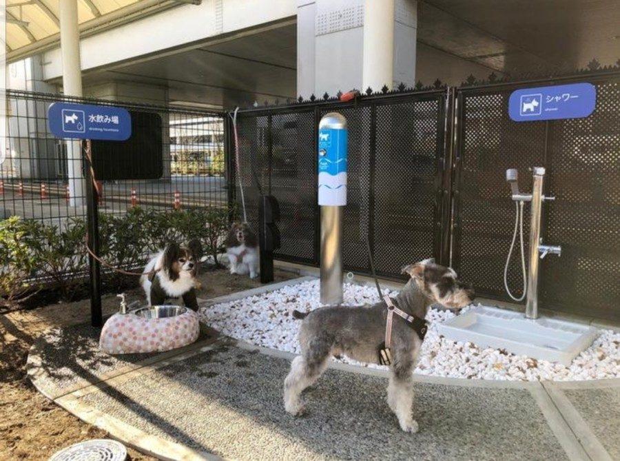 &nbspNag-install ang Osaka Airport ng eksklusibong toilet para sa mga aso