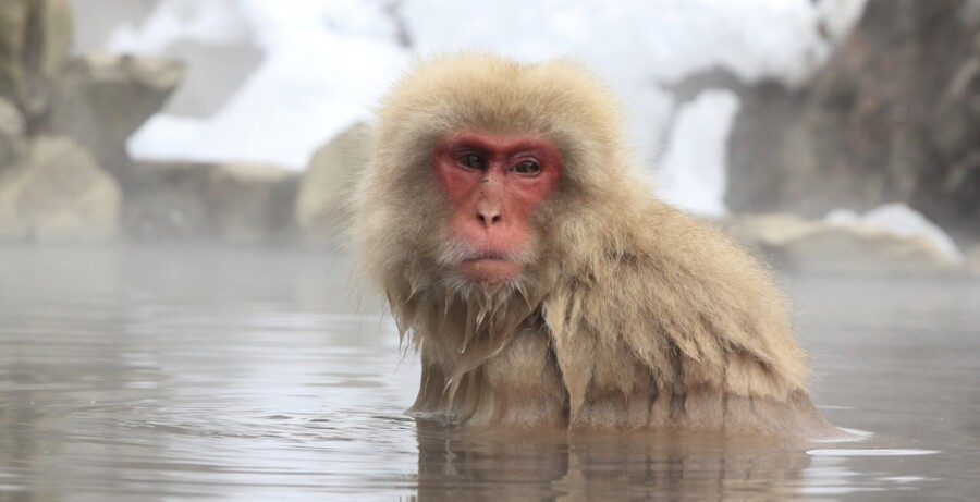 &nbspMonkey hot spring sa bulubundukin ng Nagano