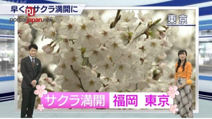 &nbspMga Cherry trees sa Tokyo, hitik sa mga namumukadkad na bulaklak